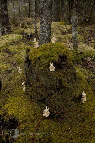 7 lapins montent la garde autour d'une souche couverte de mousse