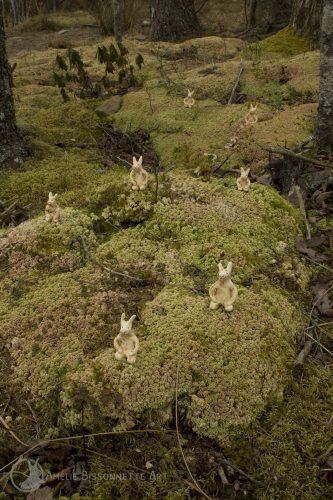 7 lapins, arborant un air fier et tranquille, positionnés à genou sur le sol d'une forêt de mousse