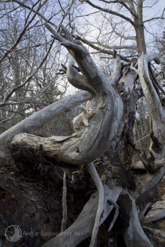 petit lapin haut perché parmi des branches sèches