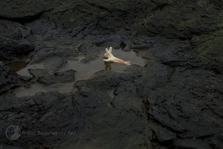 lapin-sirène se baignant dans une flaque d'eau peu profonde