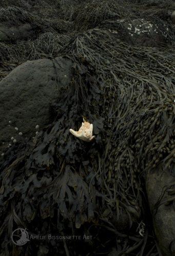Près d'une roche, un lapin aquatique se déplace dans un espace rempli d'algues