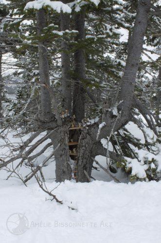 un complexe de trois étages où vivent de minuscules lapins, à l'intérieur d'un arbre fendu au tronc creux.